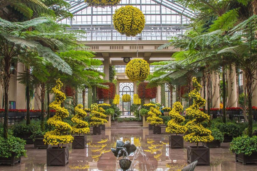 The annual Chrysanthemum Festival at Longwood Gardens
