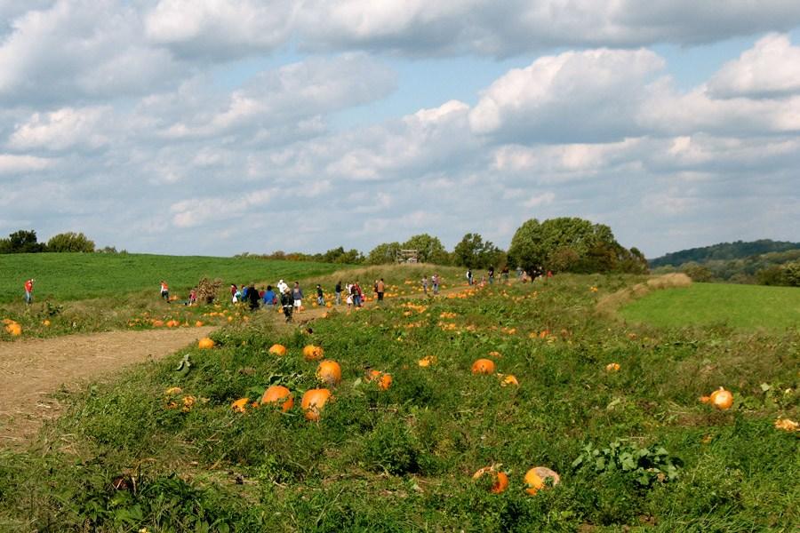 Milky Way Farm Fall Harvest