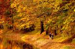 foliage - image
